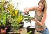 Пикировка растений — что это?