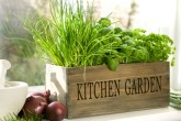 Сад и огород в квартире – земляника, травы, приправы