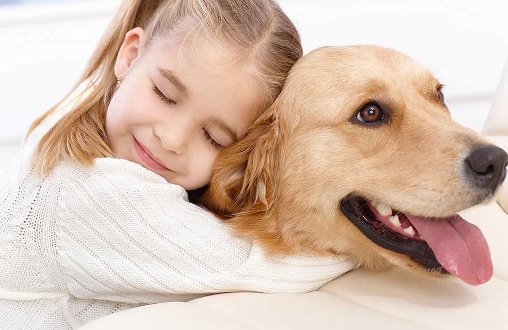 Самые умные собаки в мире: топ 10 пород собак